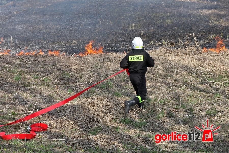 Wypalanie traw jest zabronione. Mimo to nadal płoną trawy!